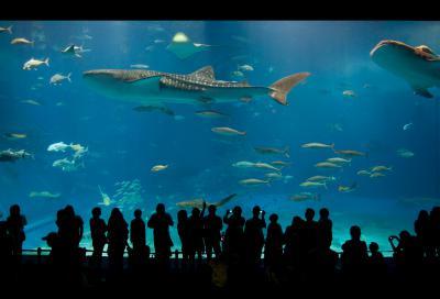 Naklejka World's largest acrylic aquarium tank