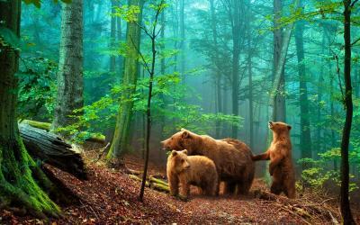 Fototapeta Misie w głębokim lesie