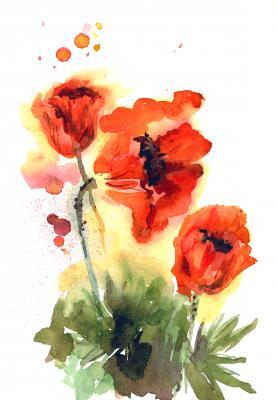 Obraz Watercolor hand drawn orange poppies on white background