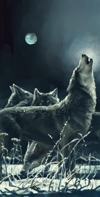 Obraz Wolf