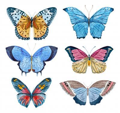 Naklejka Beautiful raster image with nice watercolor hand drawn butterflies