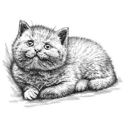 Plakat engrave isolated kitten illustration sketch