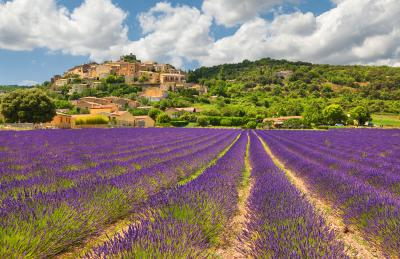 Fototapeta Town with lavender field Provence France