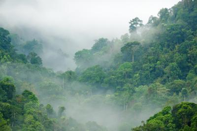 Fototapeta Fog cover the forest