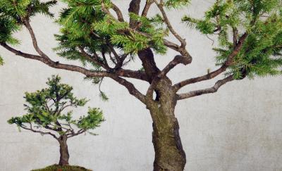 Fototapeta Tree isolated on background ruined