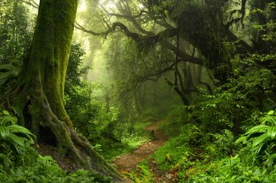 Fototapeta Nature jungle landscape