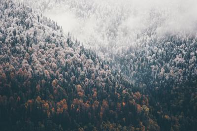 Fototapeta Foggy Autumn Coniferous Forest Landscape aerial view background Travel serene scenic view