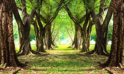 Fototapeta Magic forest green