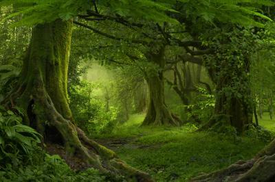 Tropical jungle in southeast asia
