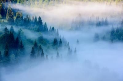 Fototapeta Beautiful morning landscape with trees in the fog