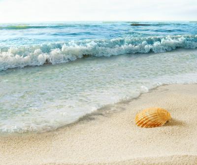 Fototapeta Shell on beach