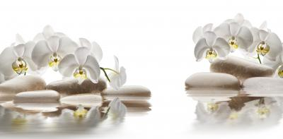 Fototapeta White orchid and stones close up