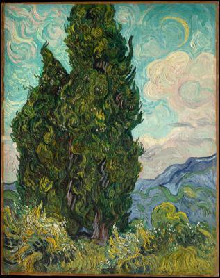Obraz Vincent van Gogh - Cyprysy