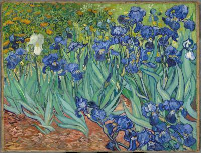 Obraz Vincent van Gogh - Irysy