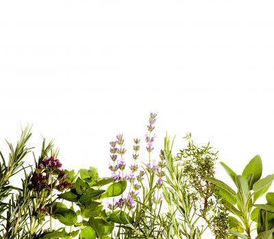 Fototapeta Zioła na białym granica