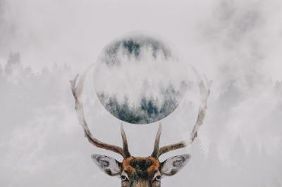 Plakat Double exposure of an antler and forest