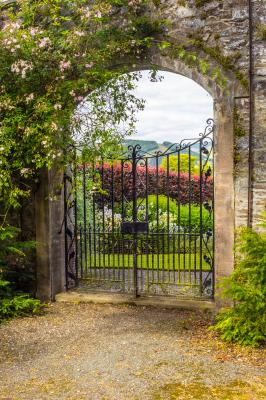 Fototapeta Beautiful old garden gate covered with green ivy