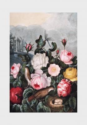 Plakat Róże ogrodowe