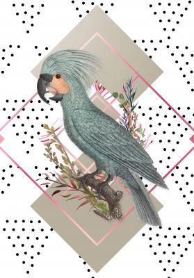 Plakat Kakadu palmowa i geometryczna wariacja