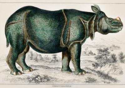 Plakat Prehistoryczny nosorożec