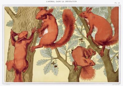 Plakat Wiewiórki na drzewie