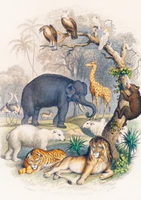 Plakat Zwierzęta w dżungli