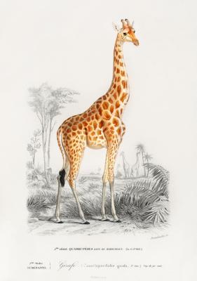 Plakat Żyrafa na tle krajobrazu