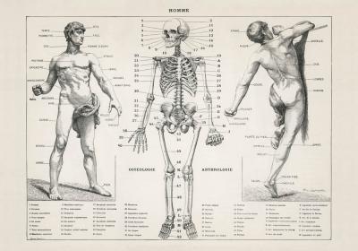 Plakat Antyczna ilustracja męskiego ciała