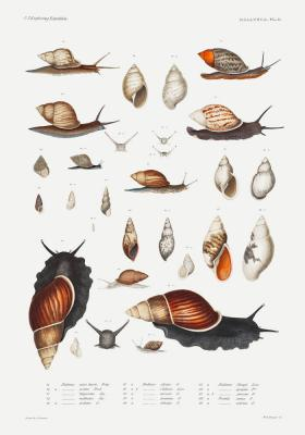 Plakat Gatunki ślimaków