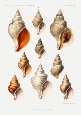 Plakat Mięczaki morskie