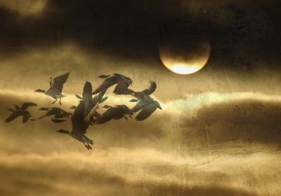 Fototapeta Ptaki lecące na tle księżyca