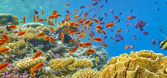 3d rafa koralowa
