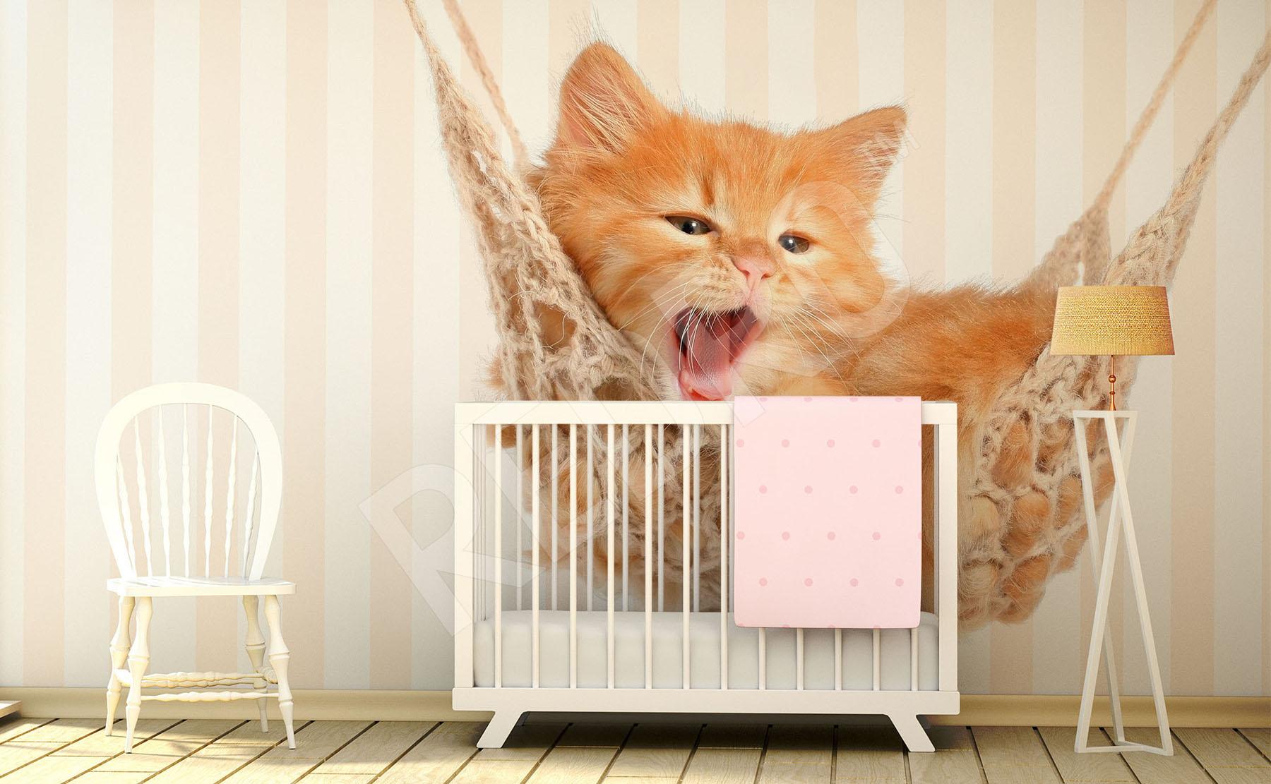 Naklejki Kot ścienne Na Wymiar Redropl
