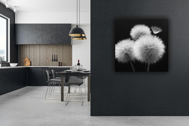 Obraz - Mniszek na czarnym tle