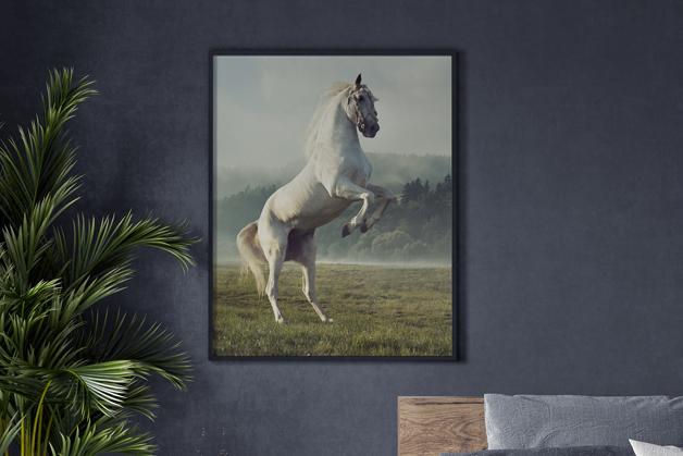 Plakat - Biały koń