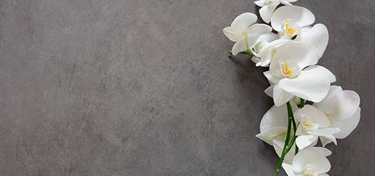 do kuchni orchidea