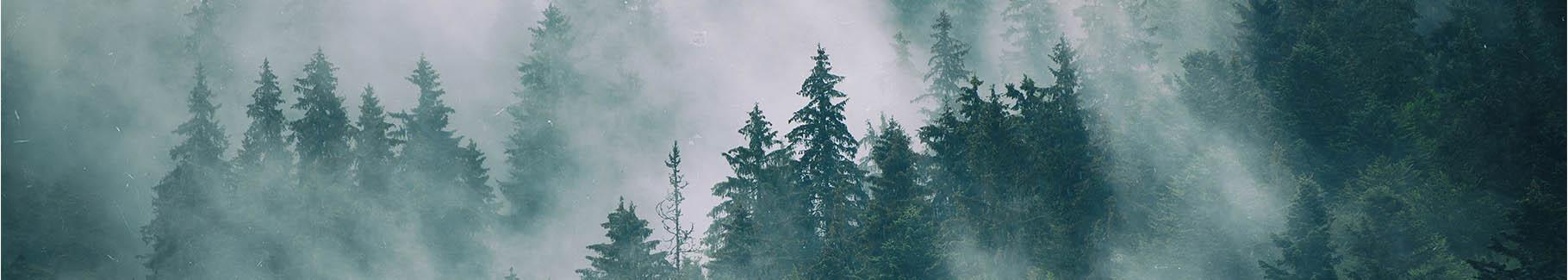 Drzewa w mglistym lesie