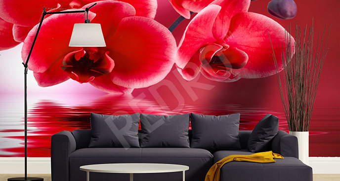 Fototapeta czerwone storczyki