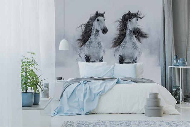 Fototapeta - Dwa konie