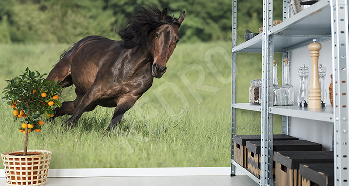 Fototapeta galopujący koń