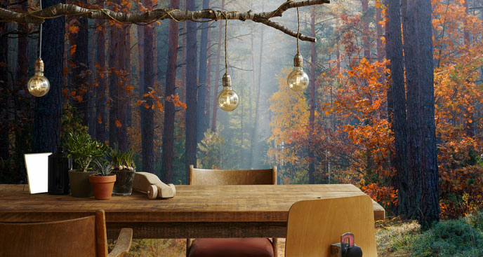 Fototapeta las jesienią
