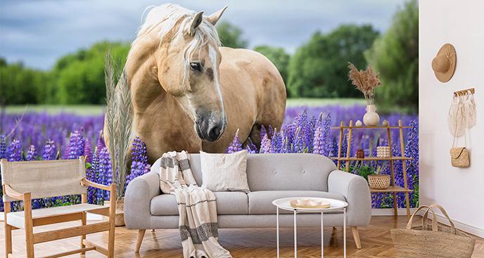 Fototapeta konie na ścianę