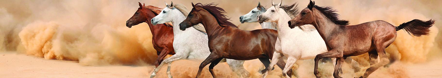 Fototapeta konie w burzy piaskowej
