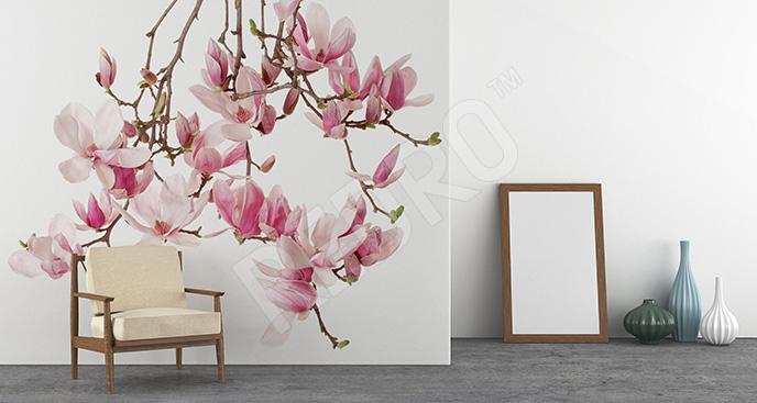 Fototapeta kwiaty magnolii na gałęzi
