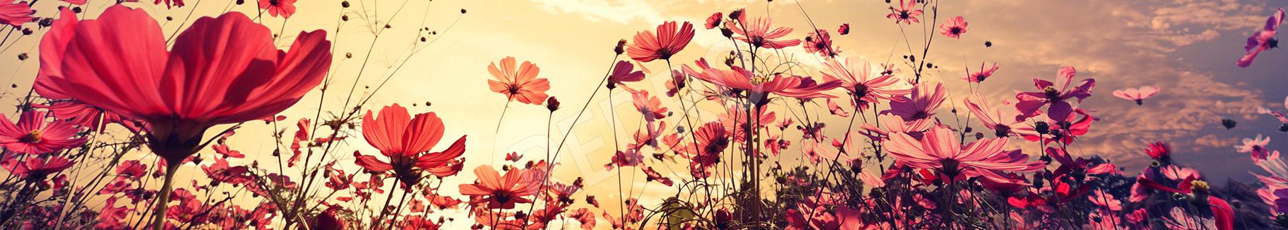 Fototapeta kwiaty na łące