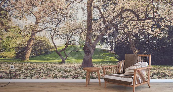 Fototapeta kwitnące drzewa magnolii