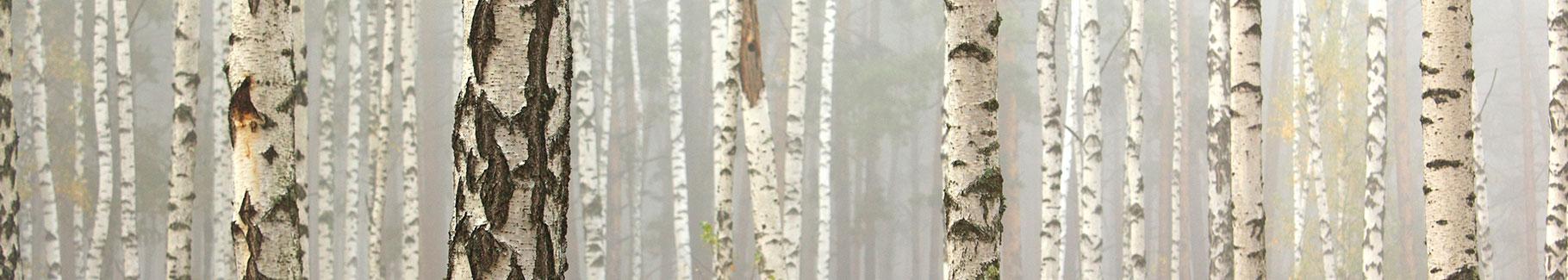 Fototapeta las liściasty