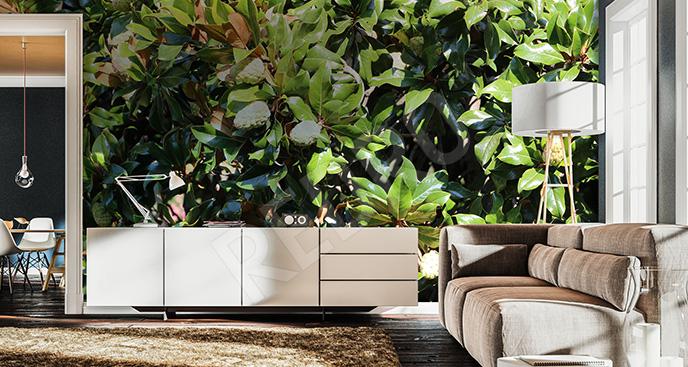 Fototapeta liście magnolii