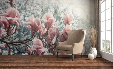 Fototapeta magnolia kwiaty w parku