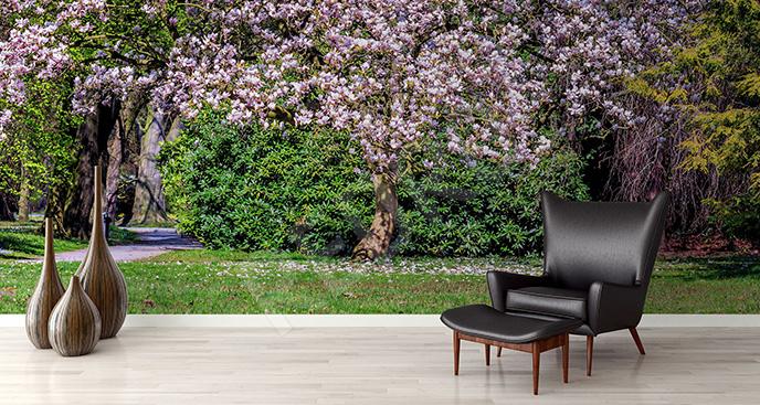 Fototapeta magnolia w parku